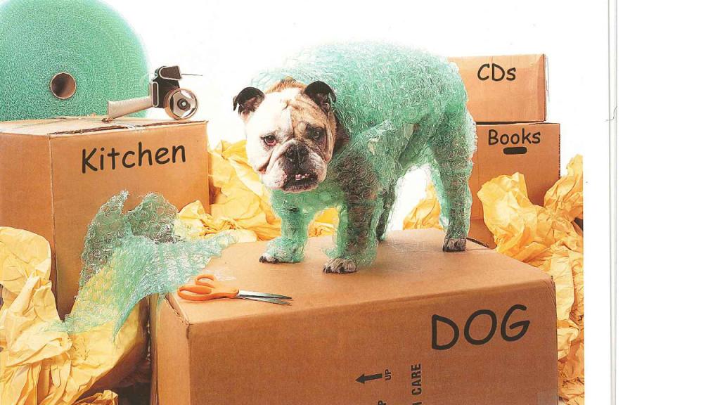 Moving-Dog