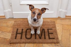 dog-at-home_Javier-Brosch