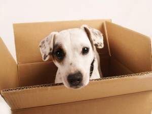 were-moving-dog-in-box