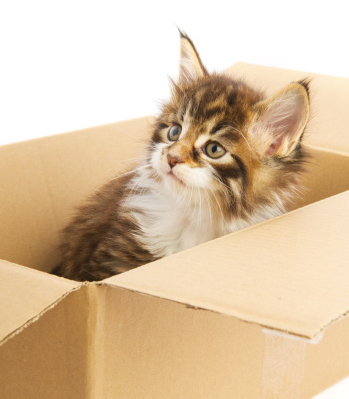 Cat Magic Cat Litter